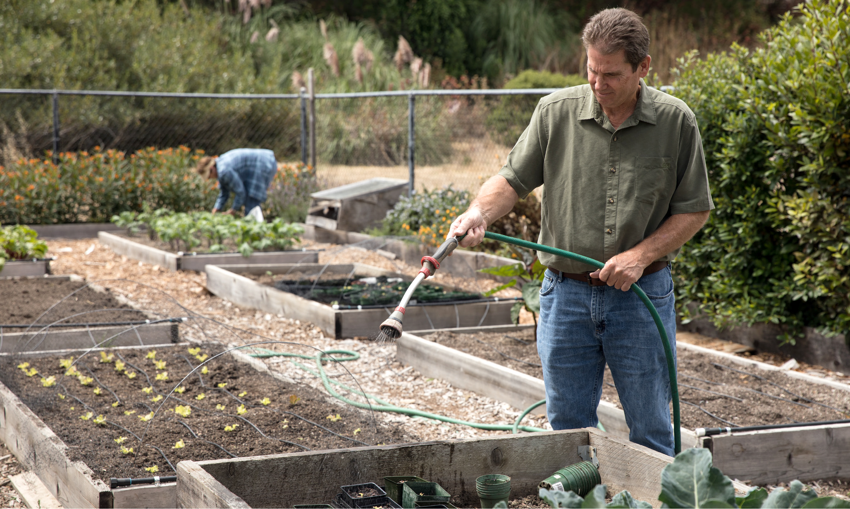 Library Assistant Chris Vance waters the butter lettuce growing in the community garden of the Pacific Sanchez Library. (Photo from October 2017 Issue of the Pacifica magazine pg. 19)